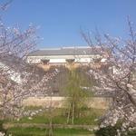 伏見 隠れた桜の名所。中書島の十石舟のりばに行ってきた。【穴場】