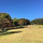 城陽 寒くてもお外で遊びたい!「鴻ノ巣山公園」で体を動かして遊ぼう♪【まち】