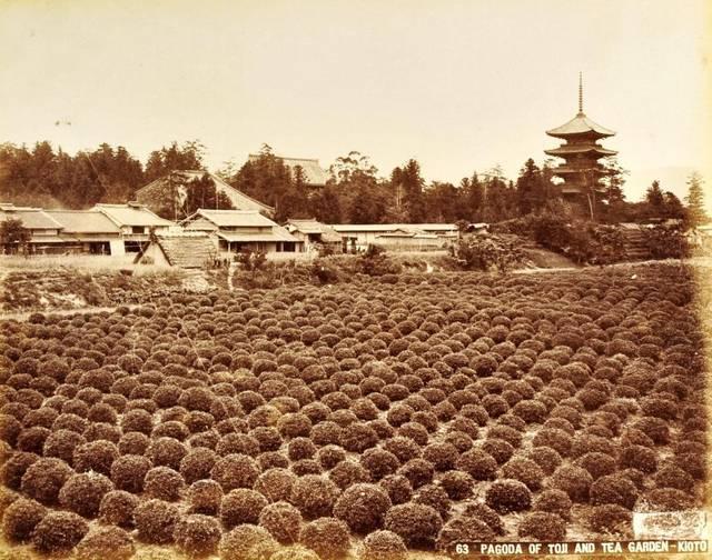 作者不明「京都の茶畑と東寺の五重塔」1880年代、鶏卵紙 © MNAA-Guimet, Paris. (30396)