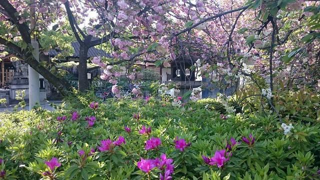 これぞ花々のバトンタッチ風景