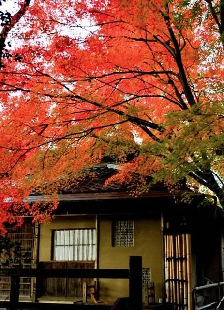 【秋は紅葉シーズンがおすすめ☆】