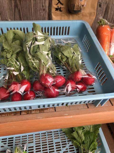並ぶお野菜