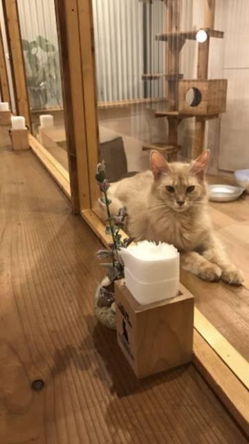 cat roomの猫さん