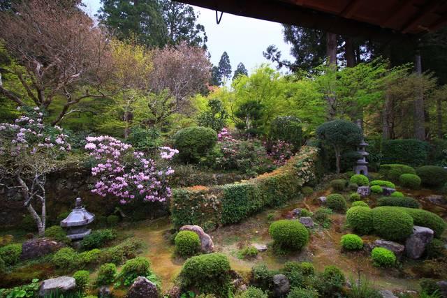 庭園のシャクナゲ