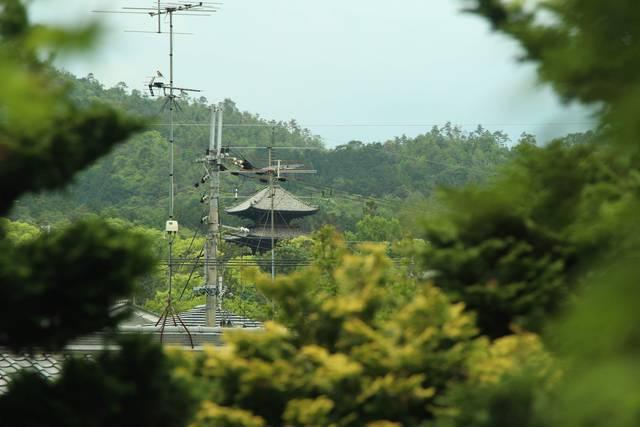 茶室付近から見る仁和寺五重塔