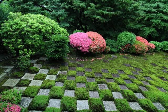 二色の皐月と市松模様の北庭