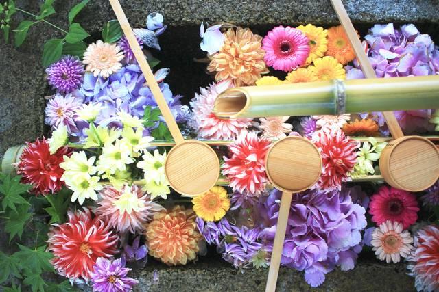 手水舎に飾られた花手水
