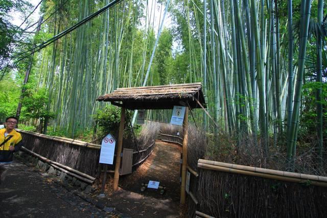 人力車が通る竹林