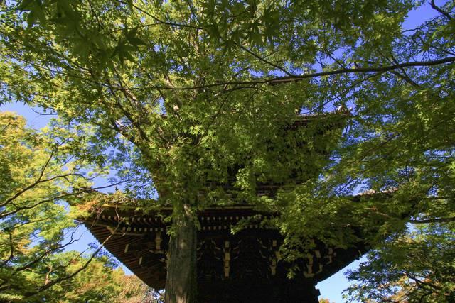 三重塔の東側