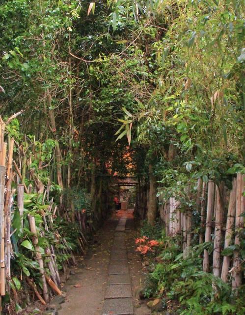 参道の竹林