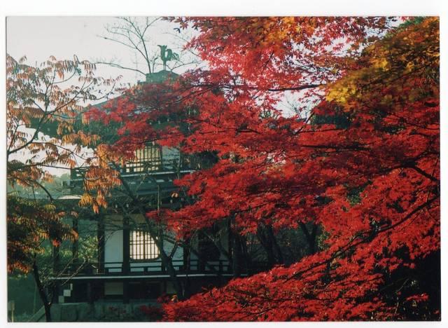 紅葉と庭園