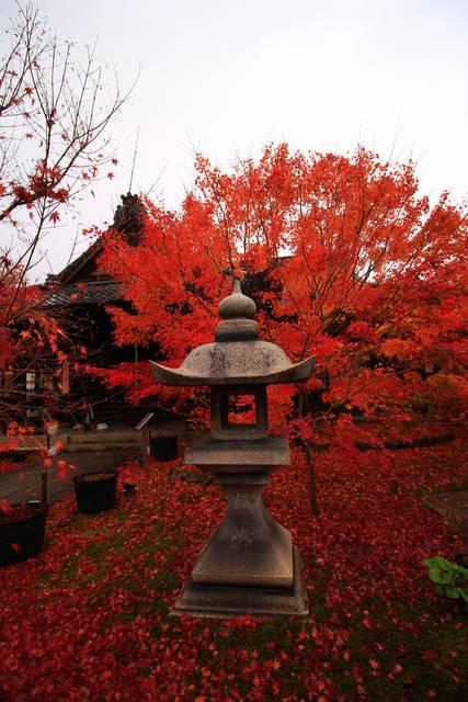 灯籠と吉祥紅葉