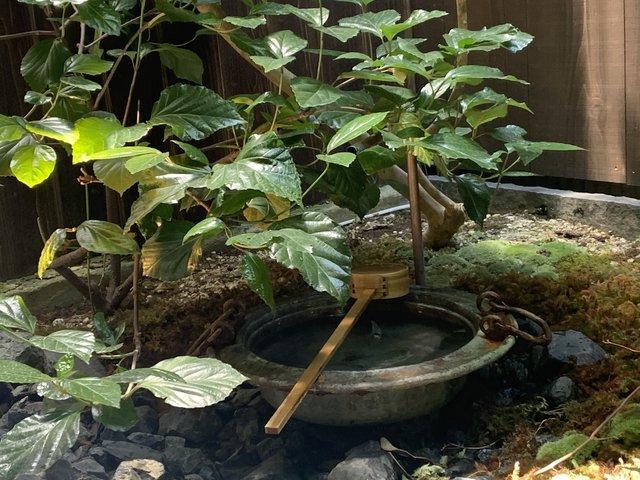 京町家の坪庭