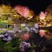 2017年春「妙心寺退蔵院のさくら特別拝観」 | おすすめ京都体験オスキョー