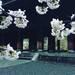 【京都南禅寺】早起きは三文の徳!桜シーズンに貴重な無料座禅体験!!桜観光は早朝に限る☆