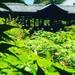 京都随一の紅葉スポットは新緑も天下一品!青もみじの海に浮かぶ通天橋必見☆