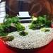 苔マニア必見!有名寺院の庭園がジオラマ苔アートに!『そうだ京都いこう』企画★「建仁寺」