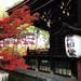 【2017京都紅葉最新】紅葉真っ盛り!JR東海『そうだ京都、行こう。』のポスターにもなった名所「真如堂」