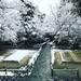 境内の雪化粧!冬らしい装いの白砂壇も絶妙な風景に☆鹿ケ谷「法然院」