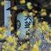 冬に咲く花 蝋梅(ろうばい)が楽しめる東山二条「大蓮寺」